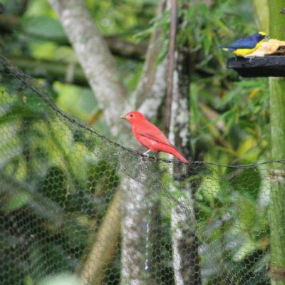 Avistamiento de Aves en el Quindio