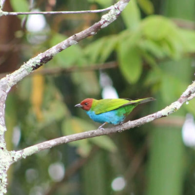 Observar Pajaros en Colombia