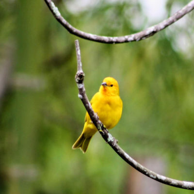 Aves en el eje cafetero